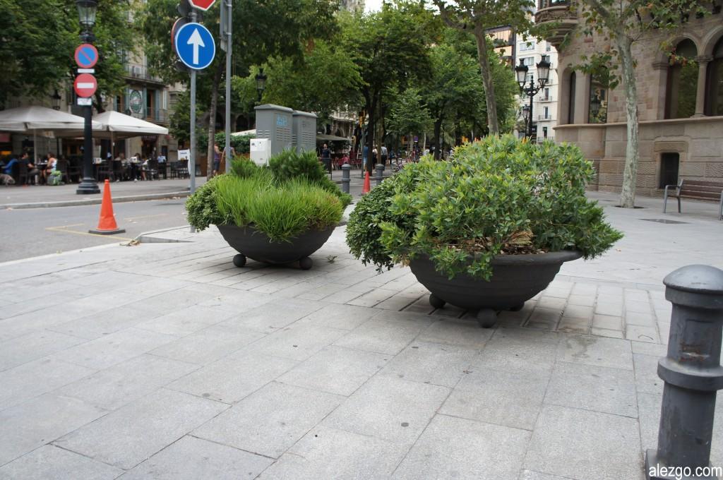 барселона деревья