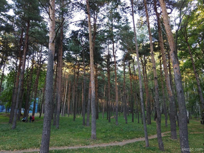 парк сосенки