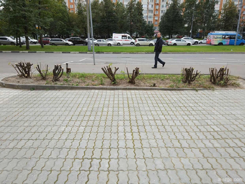 срезали кустарники под корень