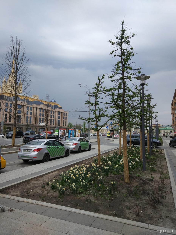 новые деревья на садовом