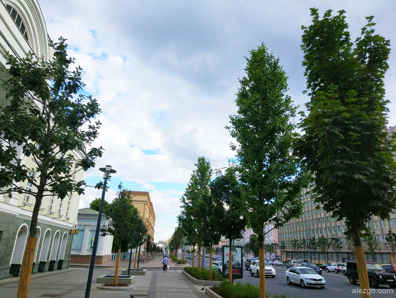деревья на садовом распустились